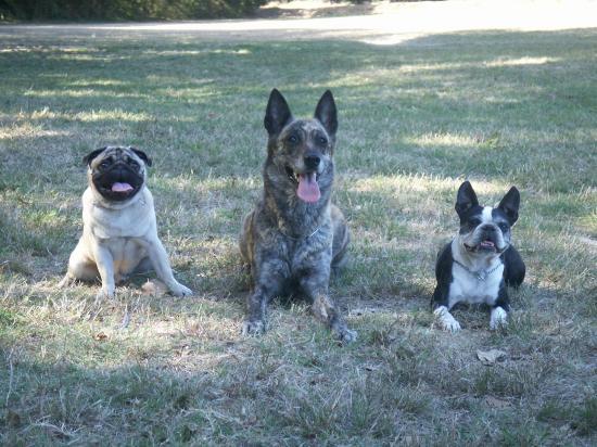 club canin aspremont