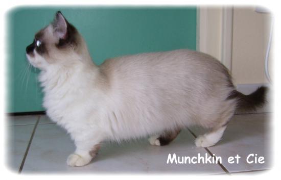 Gut gemocht A propos des Munchkins OM52