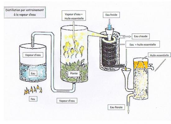 Fabrication d huile essentielle