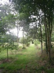 le parc boisé de Kerhir