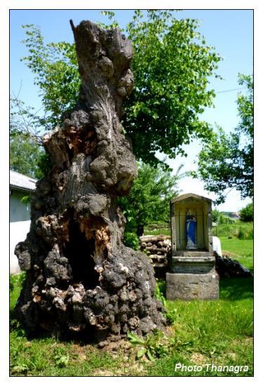 Le reposoir et l'arbre creux