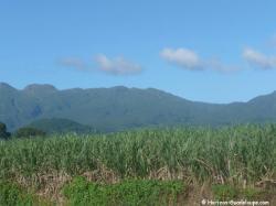 Relief de la Basse-Terre canne à sucre