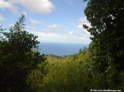 Forêt tropicale vue