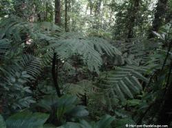 Végétation forêt tropicale
