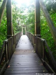 Pont suspendu au dessus de la rivière Bras David