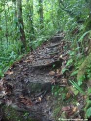 Trace en forêt tropicale