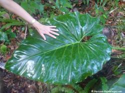 Végétation forêt tropicla Parc National