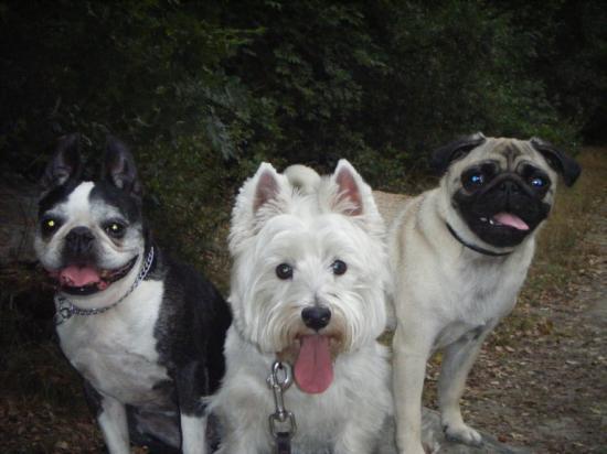 nice dogsitting 06 pension canine familiale les chiens en promenade. Black Bedroom Furniture Sets. Home Design Ideas