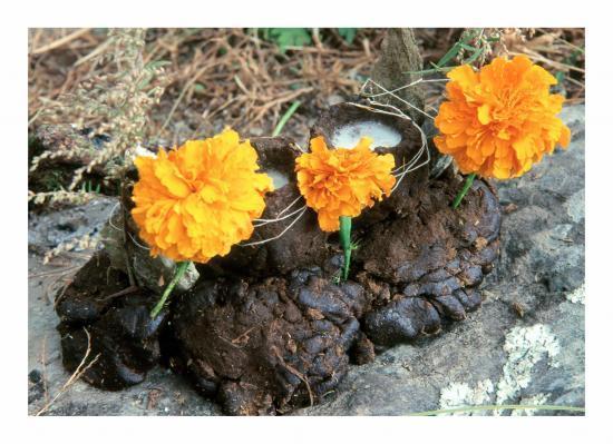 Bouquet floral bio...