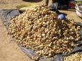 Marché de Fatoma - les oignons