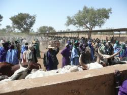 Marché de Fatoma - le marché aux bestiaux