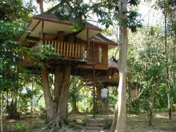 tree top bungalow in Khao Sok