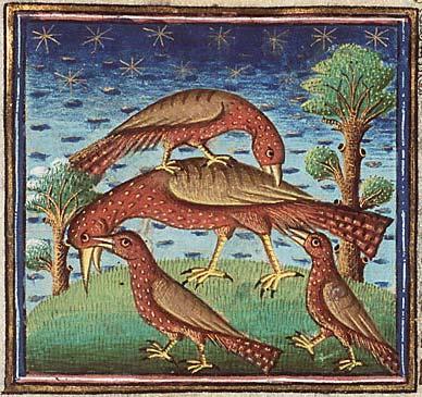 Langue des Oiseaux jérémie Guerry