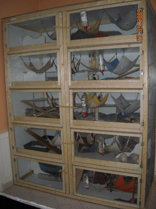 Leurs conditions de d tention for Accessoire furet fait maison