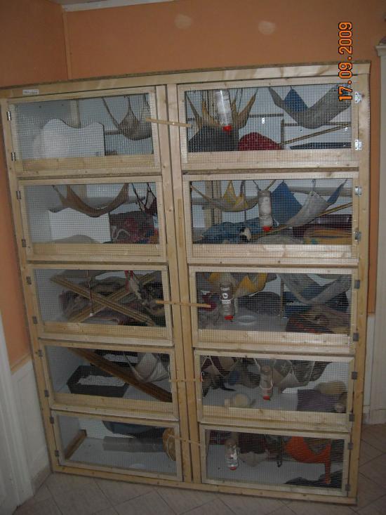 Furets for Accessoire furet fait maison
