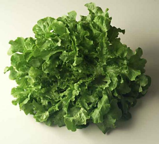 Les salades - Laitue a couper feuille de chene blonde ...