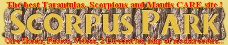No:1 Care Site of Scorpions, Tarantulas, Mantids, Whip Scorpions, Whip Spiders, Assassin bugs... with vid�os, SCORPUS BACKYARD - Scorpions and arthropodes for sale, Repampart the map of the...