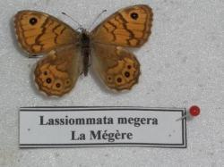 La Mégère Leg. Coll.  Photo A.M.B.