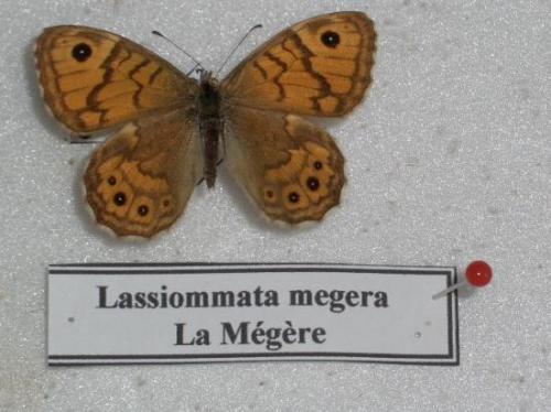 La Mégère