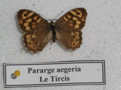 Le Tircis