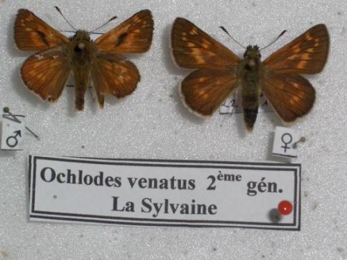 La Sylvaine