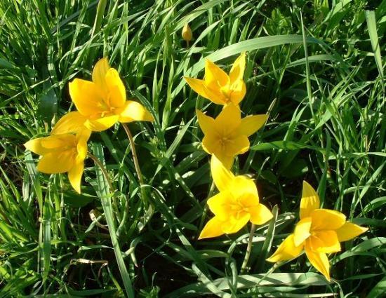 Fleurs jaunes printemps - Arbuste fleurs jaunes printemps ...