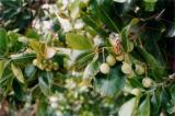 HUILE ESSENTIELLE de Saro - France-Nature - Aromathérapie