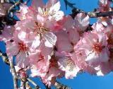 HUILE VEGETALE d'amande douce - France-Nature - Aromathérapie