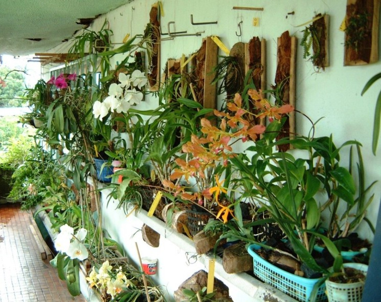 Mes orchidees en culture - Orchidee da esterno ...