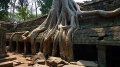 La magie du Ta Phrom a Angkor