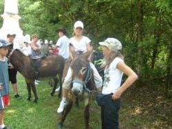 sortie avec les ânes