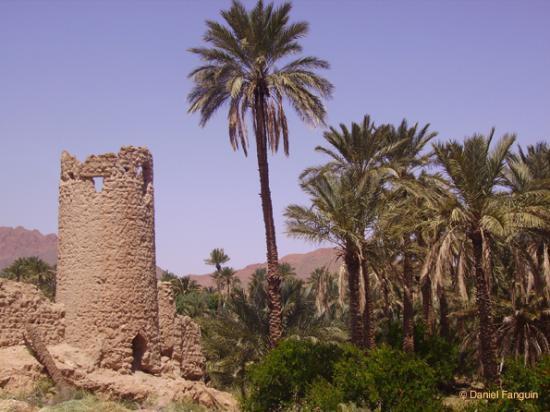 اقصى المغرب °ˆ~*¤®§(*§--فكيك مدينة القصور Figuig-4.jpg