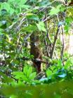 Rencontre avec un lémurien brun