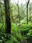Végétation luxuriante du parc de la montagne d'Ambre