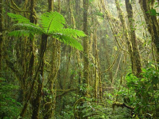"""90% des forêts tropicales """"mal gérées"""""""