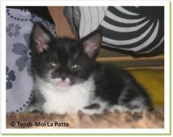 Chalalow, chaton à adopter