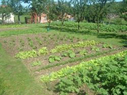 un joli jardin potager dans le village