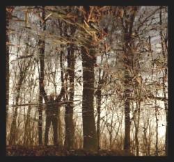 Apoptose - Bannwald