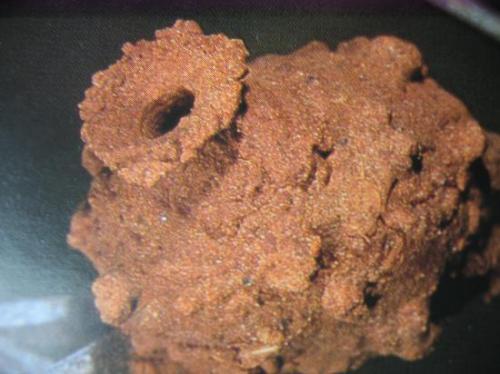Nid achevé mais non bouché d'Eumenes coarctatus (Remarquez la forme de l'amphore) Hyménoptère du Moulin Photo A.M.B 2010