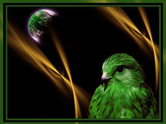 oiseau qui reve d'un autre monde