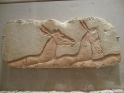 photo 4 antilopes