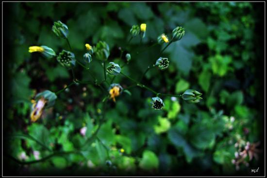 Luminescence d'une fleur
