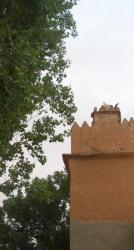 vieille mosquée