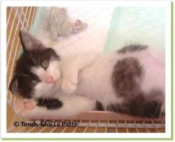 Lulu, chaton à adopter